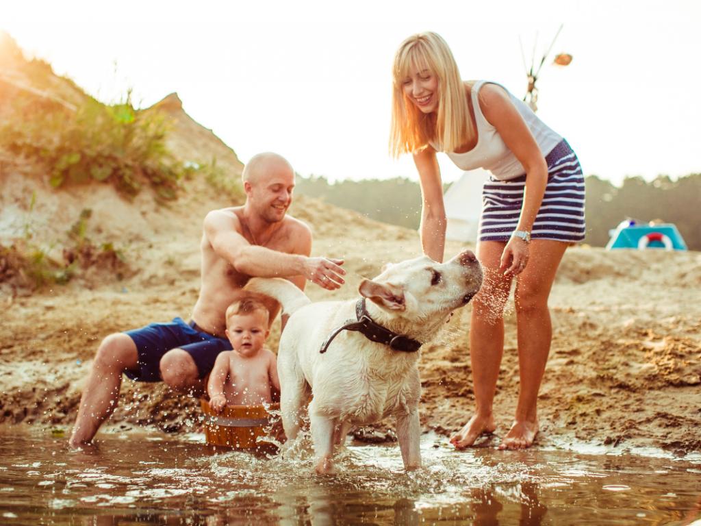 Mire figyelj a nyári melegben, ha 1 évesnél fiatalabb kutyát tartasz?
