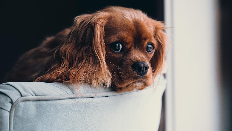 2. Milyen a kutya személyisége?